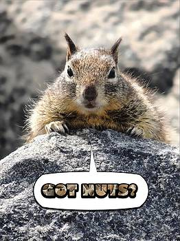 Got Nuts? by Brian D Meredith