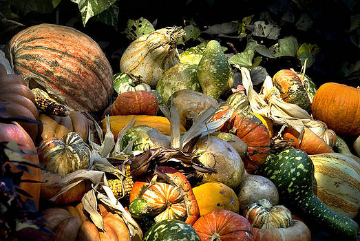 Gourds and Corn by Cindy Rubin