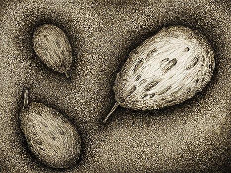 Gourds- Black by Sara Coolidge