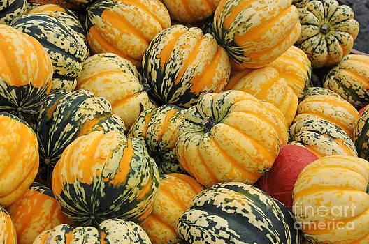 Sarah Schroder - Gourds I