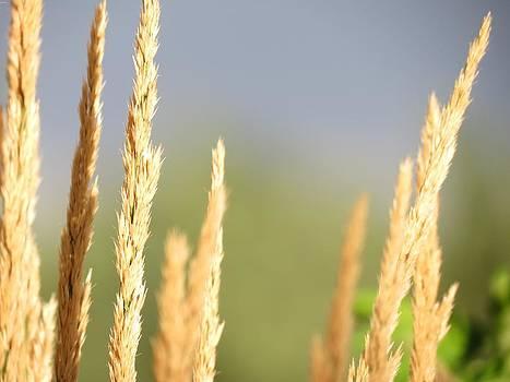 Grain by Don Barnes