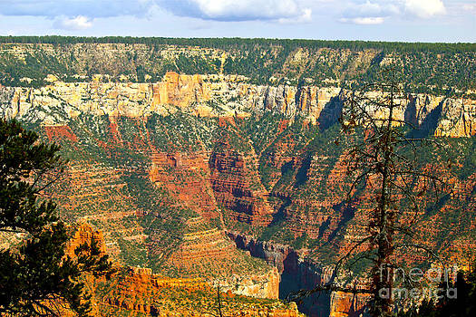 Grand Canyon North Rim 1 by Bianca Collins