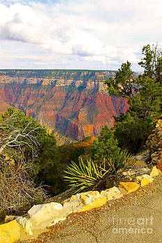 Grand Canyon North Rim 4 by Bianca Collins