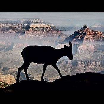 Grand Canyon #silhouette by Michael Misciagno