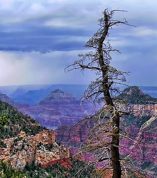 Diana Cox - Grand Canyon Snag