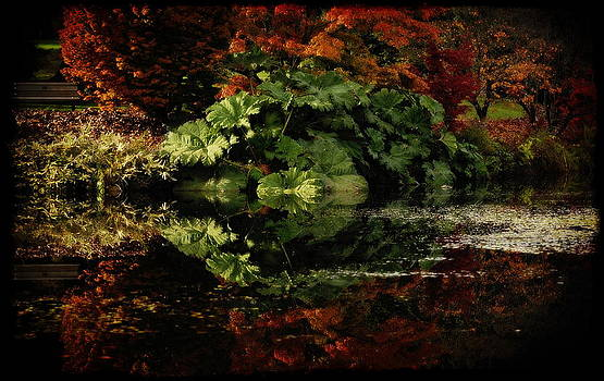 Sandra Sigfusson - Grand Gunnera