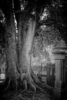 Grandiflora by John Monteath