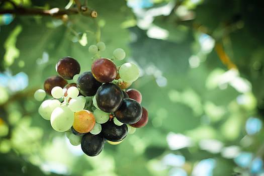 Grapes by Yekaterina Grigoryeva