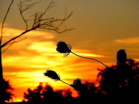 Ms Judi - Grasping The Sunset