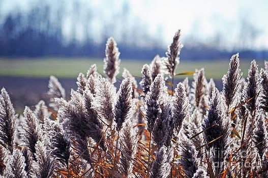 Elaine Mikkelstrup - Grass Alight