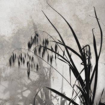 Grass by Aref Nammari