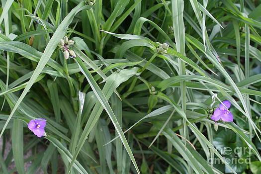 Grass by Bozena Chmielewska