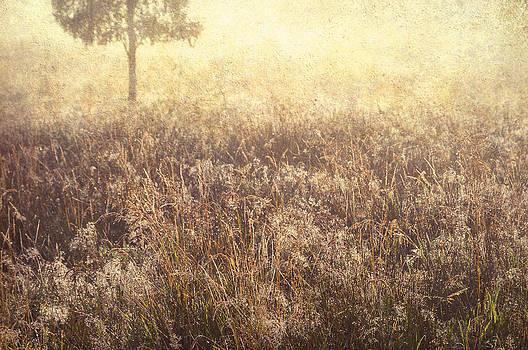 Jenny Rainbow - Grass Diamonds