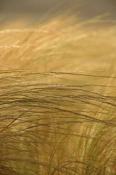 Grass by Ryan Louis Maccione
