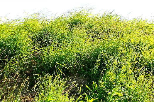 grass. WILD GRASS by Michael Clarke JP