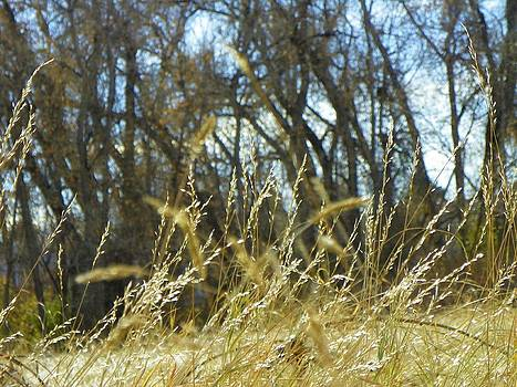 Grasses by Vicky Mowrer