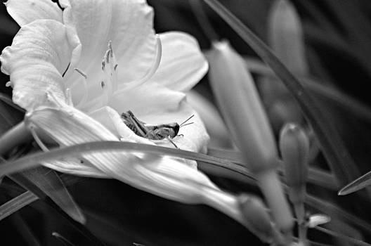 Mary Frances - Grasshopper Days BW