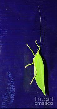 Grasshopper by Jiss Joseph