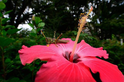 Bourbon  Street - Grasshopper on Flower