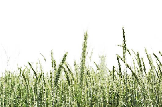 Grassy by Tom Bush IV