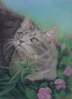 Gray Cat in a Flower Bed by Pamela Humbargar