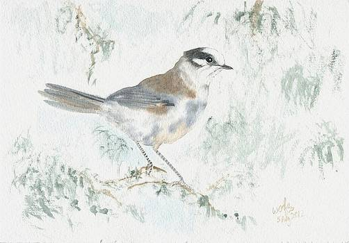 Gray jay by Wenfei Tong