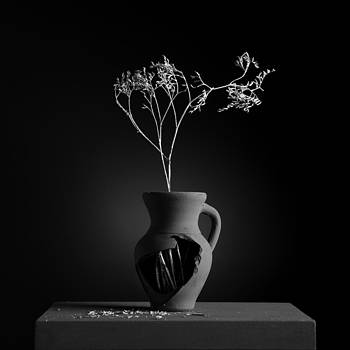 Gray Variations - Roots by Ovidiu Bastea