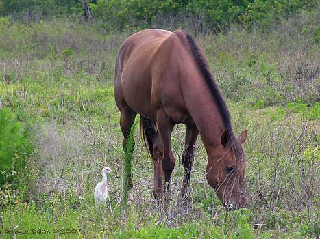 Grace Dillon - Grazing Chestnut Horse with Cattle Egret