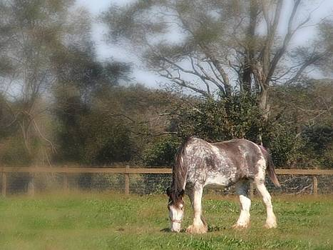 Kimberly Perry - Grazing Clydesdale