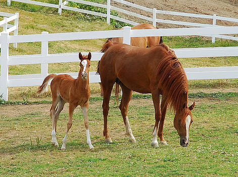 Grazing with the Young One by Wanda Jesfield