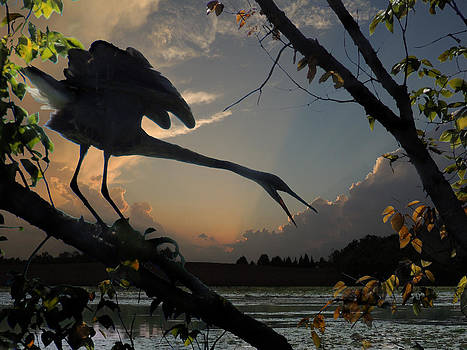 Amalia Jonas - Great Blue Heron