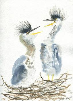 Great blue heron chicks by Wenfei Tong