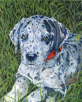 Great Dane Merle by Karen Curley