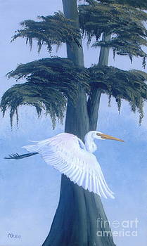 Great Egret in Flight by Michael Allen