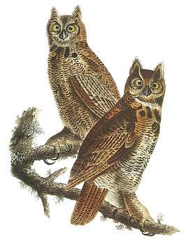 John James Audubon - Great Horned Owl