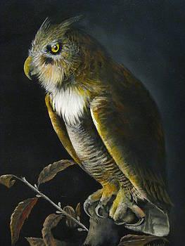 Great-horned Owl by John Neal Mullican