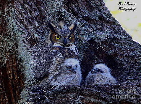 Barbara Bowen - Great Horned Owl Twins