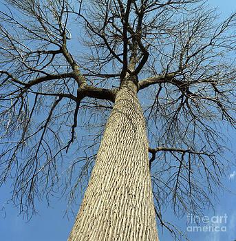 Great Tree by Rick Jack