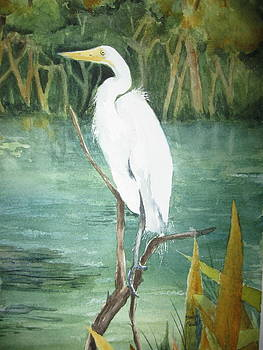 Great White Egret by Marilyn  Clement