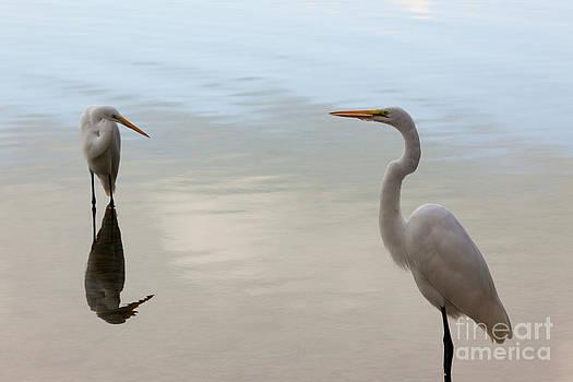 Keith Kapple - Great White Heron