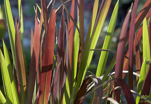 Green and Red by Kenneth Hadlock