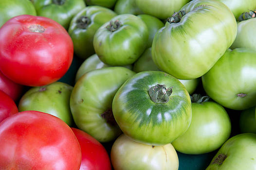 Dina Calvarese - green and red tomatoes