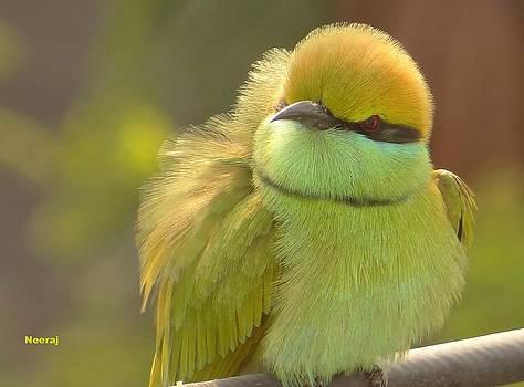 Green bee eater by Neeraj Vegad
