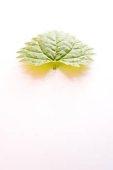 Green blade by Daniel Kulinski