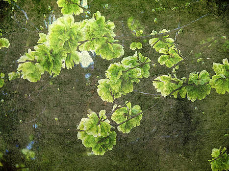 Green Blossoms by Angela Bruno