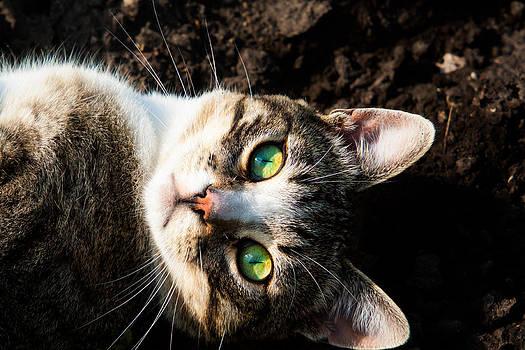 Matt Dobson - Green Eyes