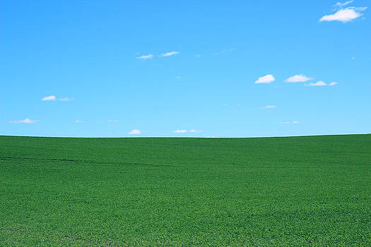 Green Field Blue Sky by Jeramie Curtice