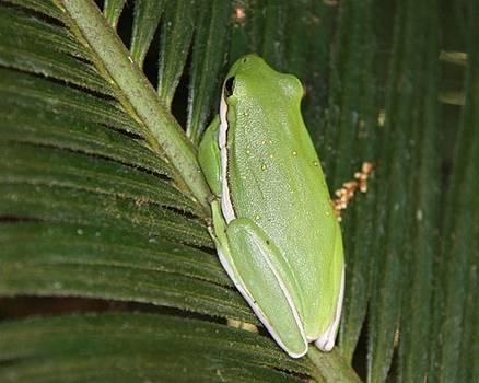 Green Frog by Jim Ziemer