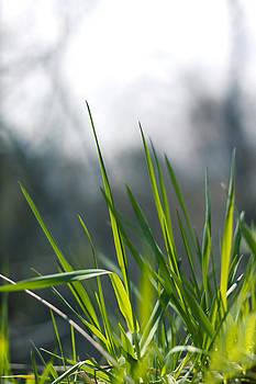 Green grass by Vanessa Ferland