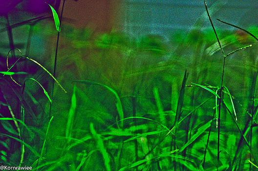 Green green grass of home by Kornrawiee Miu Miu